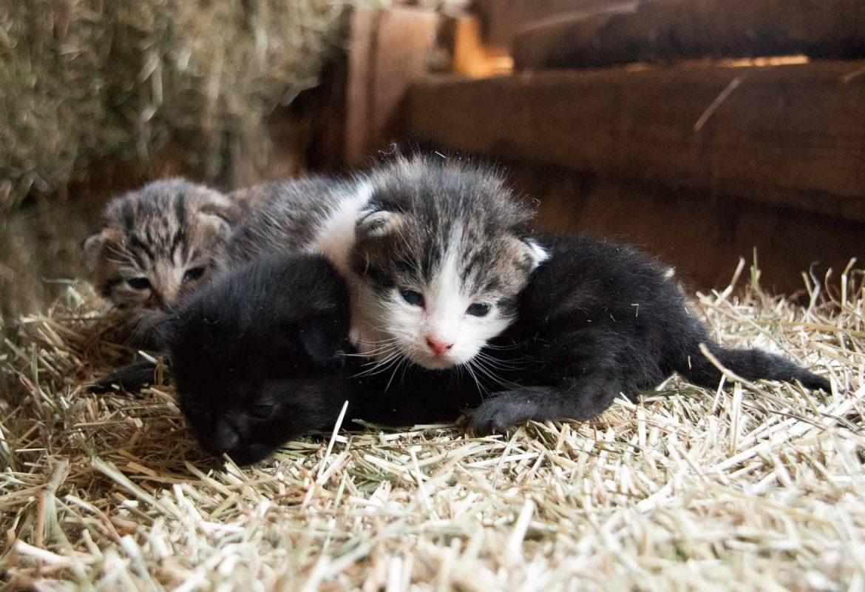 Katzenbabys liegen auf dem Stroh