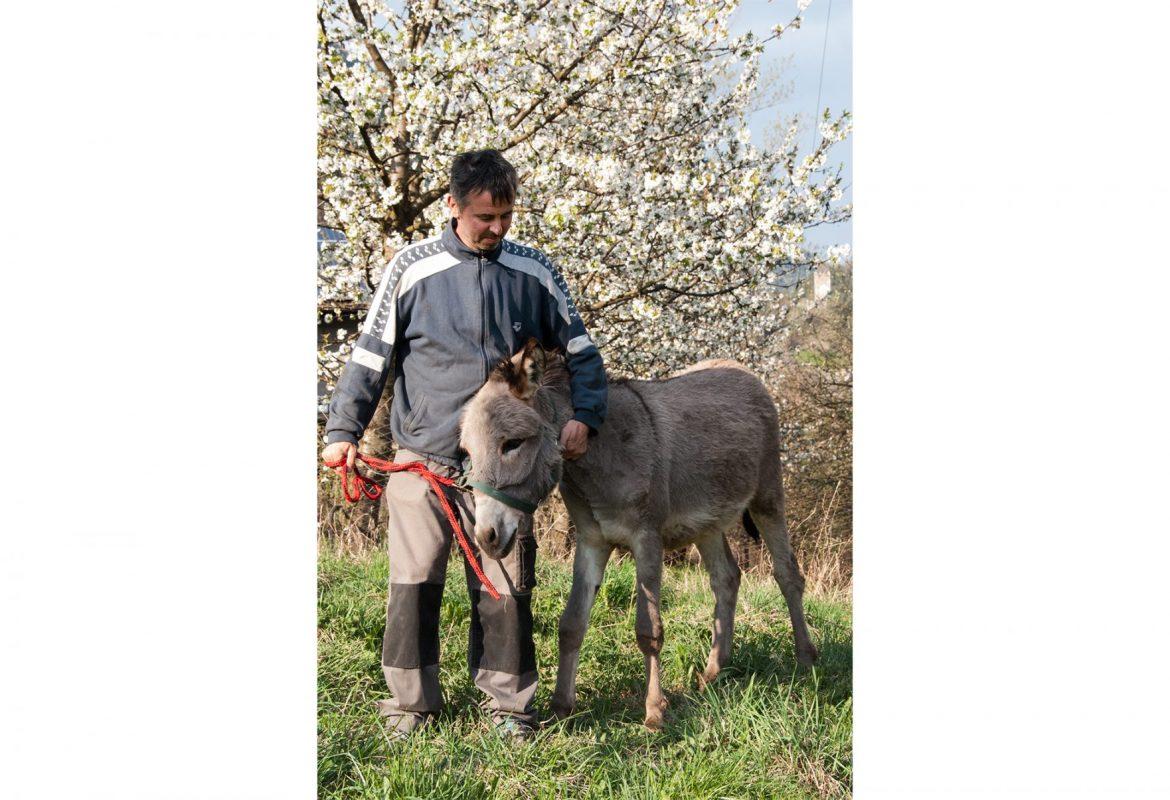 Klaus mit Esel auf der Wiese, St. Pankraz, Ultental